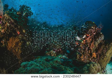 Shoal Of Tropical Fish In Their Ecosystem