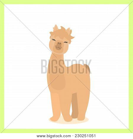 Alpaca. Vector Flat For Print. Vector Cute Alpaca. Llama Animal. Cute Baby Alpaca.