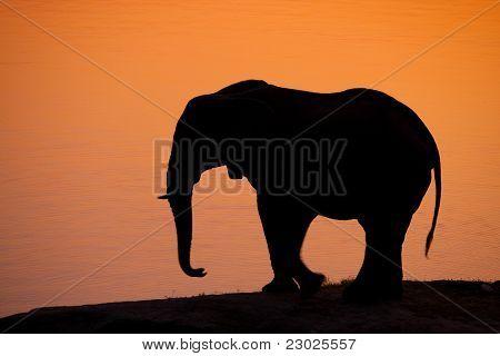 Elefant-Kontur