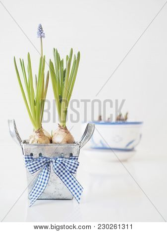 Spring Blue Flower With Ribbon On White Background