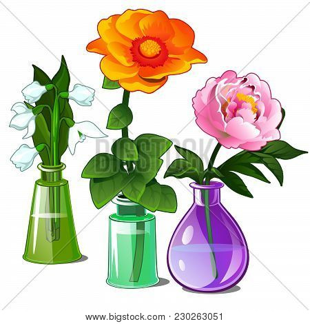 Snowdrop, Zinnias And Peonies In Glass Vases. Vector Illustration.