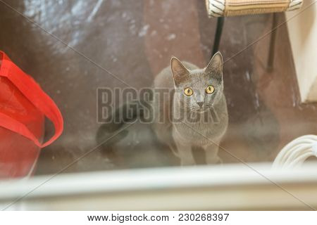 Cat Outside The Window, Hungry Gas, Pet, Portrait