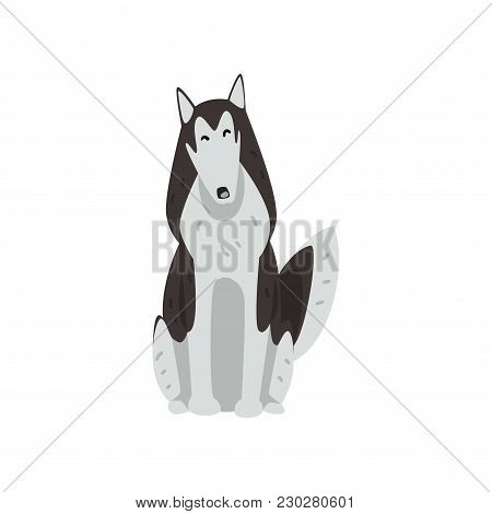 Siberian Husky Dog Character Sitting, Purebred Dog Vector Illustrations Isolated On A White Backgrou