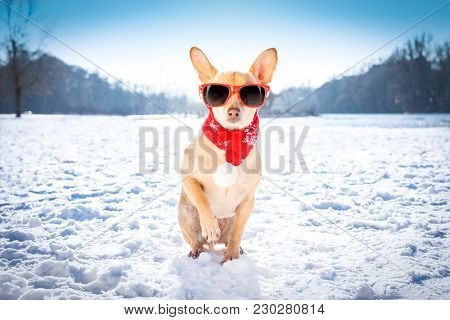Cool Funny Freezing Icy Dog In Snow With Sunglasses And Scarf, Sitting And Waiting To Go For A Walk