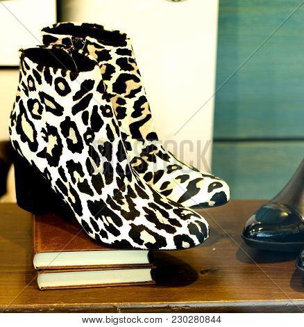 Womens High Heeled Shoe. Generic Design. No People
