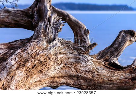 Chunk Of Driftwood In Western Washington During Late Winter