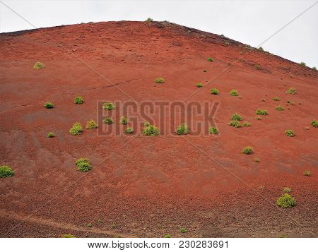 Plants Colonising The Red Oxidised Surface Of Montana Colorada  Volcano, Lanzarote
