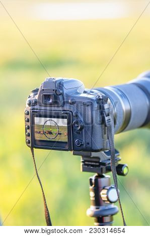Photographer-animal Painter, Taking Pictures Of Wild Horses.