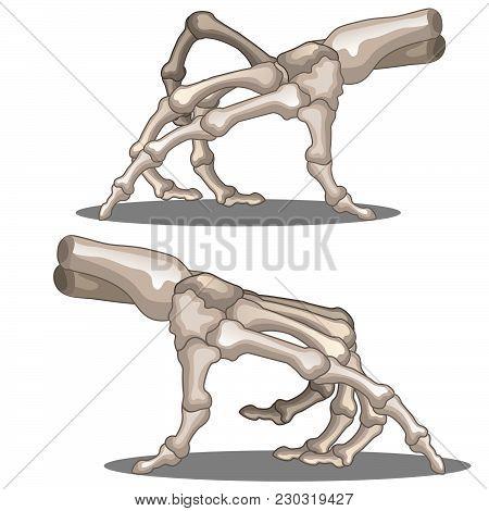 The Bones Of The Hands Of Man. Vector.
