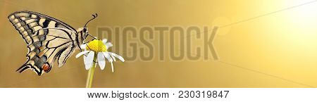 Beautiful Butterfly Sitting On A Flower - Web Banner Of Spring, Summer Concept
