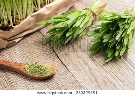 Green Barley Grass Powder On A Spoon, With Fresh Homegrown Barley Grass In The Background, With Copy