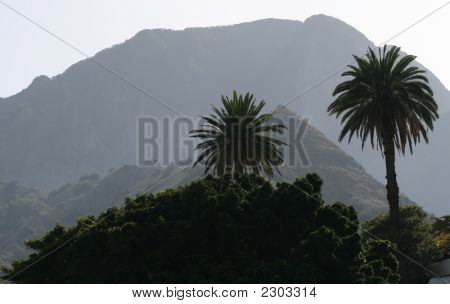 Palms And Mountains