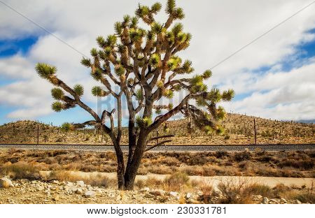 A Joshua Tree In Front Of A Railroad Track With Shrub Dotted Hills In The Background Under A Cloudy