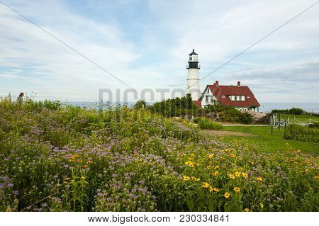 Maine Lighthouse With Wildflowers In Foreground