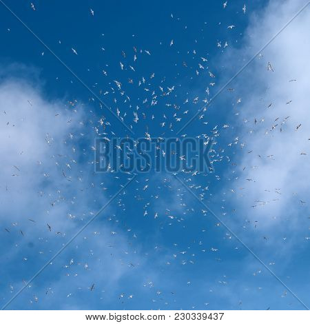 Birds Fly Against The Blue Sky Between Two Clouds. Fly Concept. Dream. Life Style.