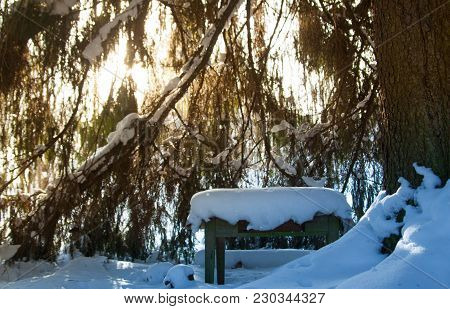 Scenic View Of Sun Lights Going Through Spruce Twigs And Shining Snow Dust. Small Wooden Table Cover