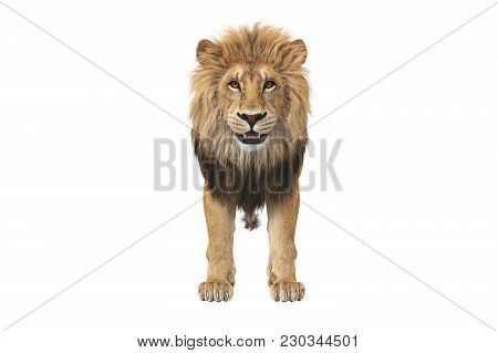 Lion Animal Beast With Orange Eyes, Front View. 3d Rendering