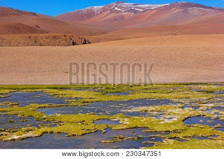 Panorama Of Atacama Desert At High Altitude After The Rain. Natural Beauty Of Unspoiled Desert Lands