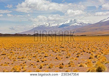 High Altitude Grassland Of Atacama Desert With Snow Peaked Mountain On Horizon, Chile. Majestically