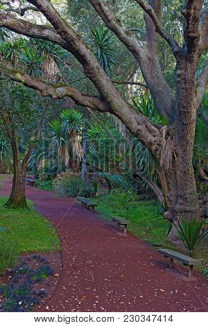 Alley In A Tropical Park On Sao Miguel Island, Azores, Portugal. Forest Magic Of Large Trees, Palms