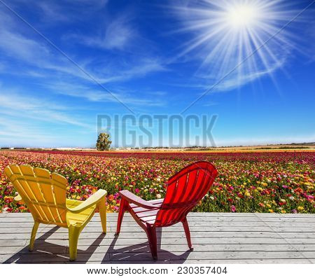Comfortable plastic chairs for relaxation stand next to the flower field. Farmer field for cultivation of garden buttercups - ranunculus. Concept of rural and ecological tourism