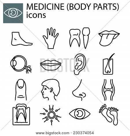 Web Line Set. Medicine (body Parts) Black On White Background