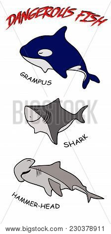 Vector Set Of Predator Fish: Shark, Killer Whale And Fish Hammer. Smiling Smiling Fish