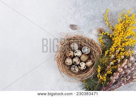 Quails eggs in nest and yellow flowers. Easter greeting card. Top view with space for your greetings