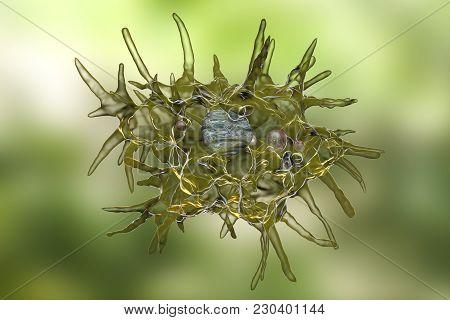 Acanthamoeba Castellanii Amoeba, 3d Illustration. Amoeba Found In All Aquatic Habitats And Soil, Cau