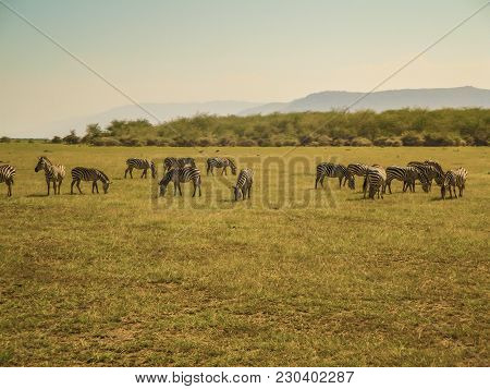Animal Nature And Wildlife Group Of Different Herbivore Animals In Kenya