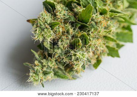 Close Up Of Freshly Harvested Cannabis Medical Marijuana Flowers