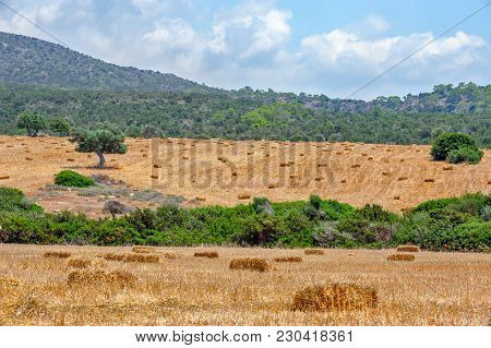 Agriculture Field In Mountains With Straw Bales