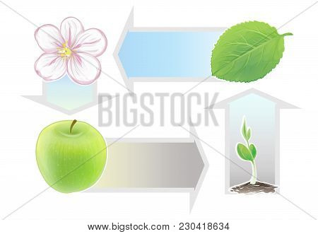 For Example, The Cycle Of Nature Apple. Apple Flower Turns Into A Fruit, The Fruit Falls To The Grou