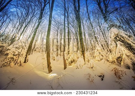Sunny Day In The Deciduous Forest Covered With Deep Snow.