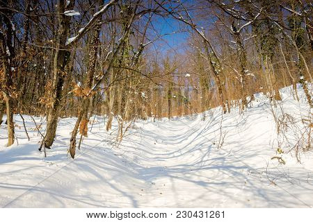 Sunny Day In The Deciduous Forest Covered With Deep Snow At Winter.