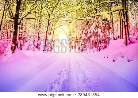 Pathway Going Thru The Deciduous Forest Covered With Deep Snow At Winter, Graduated Filter, Digitall