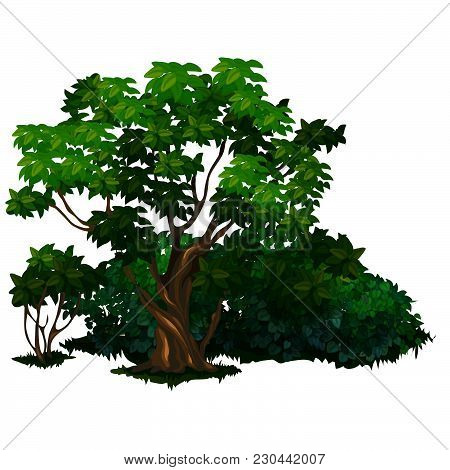 Old Deciduous Trees And Shrubs In The Park. The Vector Image.