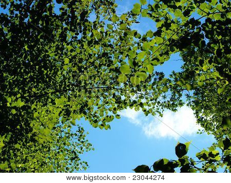 View through green foliage and birch branch