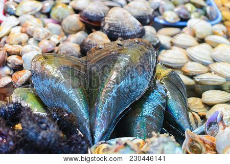 Shellfish And Clams At Fish Market In Jagalchi In Busan, South Korea