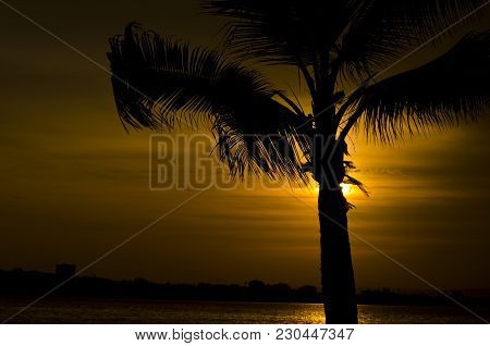 Sunrise In Colombia, Behind Palm´s Figure, The Color Of The Sun Creates A Shadow