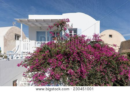 Traditional Greek Architecture And Pink Flowers In The Town Of Oia In Santorini