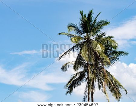 Coconut Palm Tree Against With Blue Sky And White Cloud.