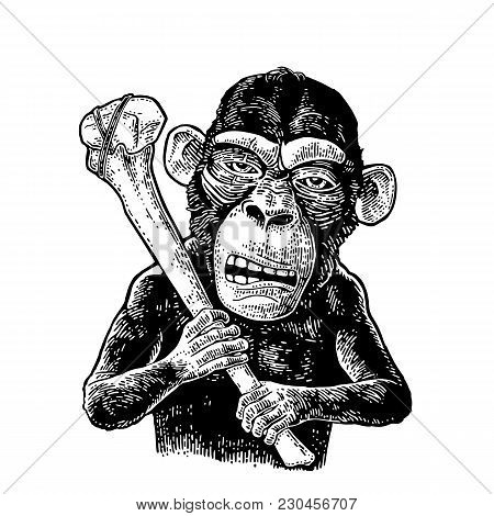 Monkey Holding Tibia. Vintage Black Engraving Illustration For Poster And T-shirt Design. Isolated O