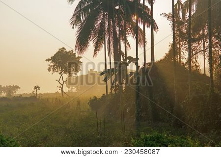 Morning Scene , Agriculture Land - Rural India
