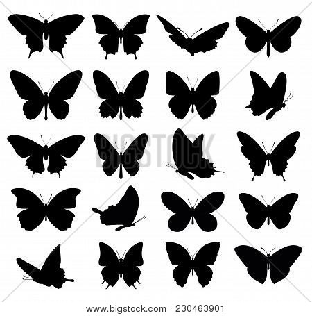 Butterflies Set. Silhouette Of Butterflies. Vector Illustration.