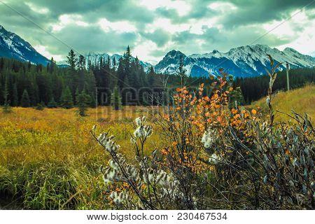 From The Roadside, Peter Lougheed Provincial Park, Alberta, Canada