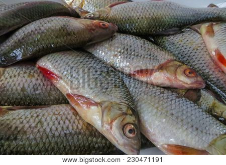 Fresh Fish Caught In The Lake On A Plate.