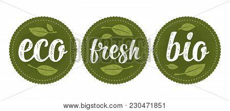 Bio, Eco, Fresh Calligraphic Handwriting Lettering And Leaf. Vector White Vintage Illustration Isola