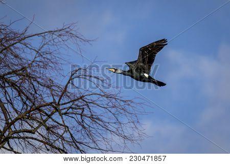 Perched Rare Cormorant Bird On A Bright Sunny Day
