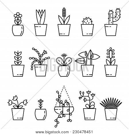Set Of House Plant Isolated Vector Flat Illustration. Outline House Plants In Pot.